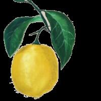 The Lemon Tree Juice Bar Logo