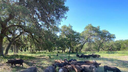 Pure Pastures