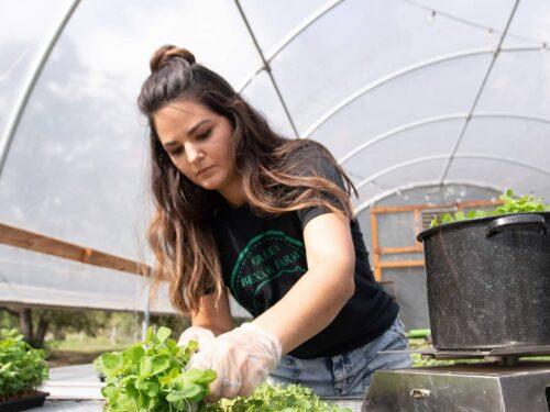 Green Bexar Farm - Microgreens