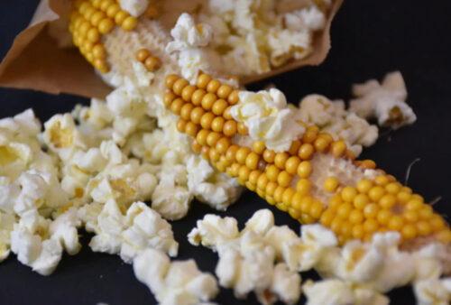 Fruitful Hill Farm - Popping Corn
