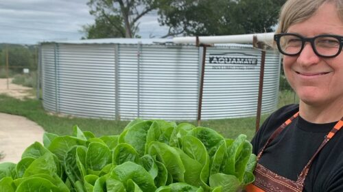 Mikey's Garden - Romaine Lettuce