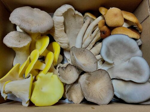 South Texas Seasonals: Mixed Mushroom Box