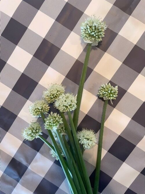 braune farm - onion blooms