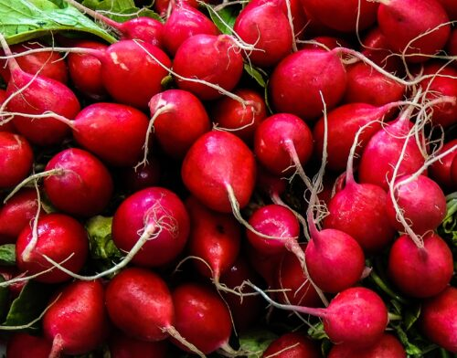 red round fruits on green grass