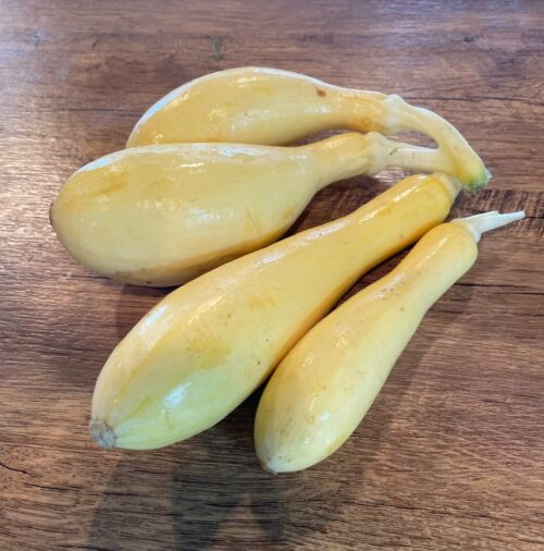 yellow squash- Fruitful Hill