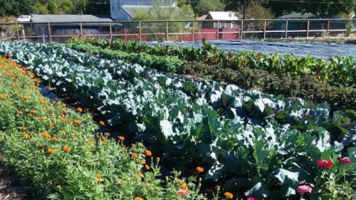 Turniphead Gardens: Plants