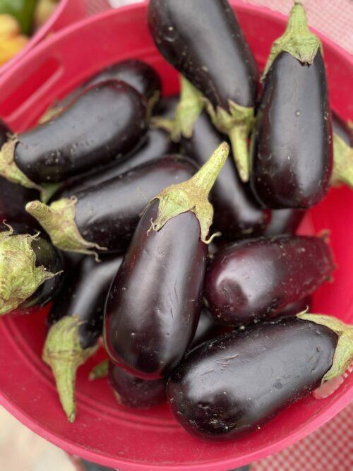 eggplant - braune farm
