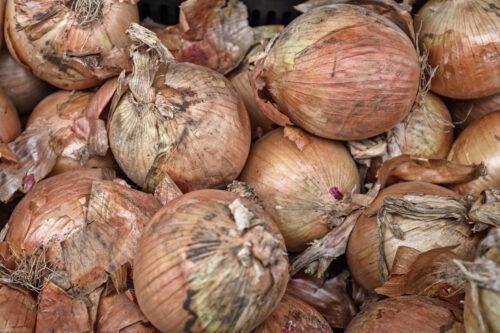 white onion lot