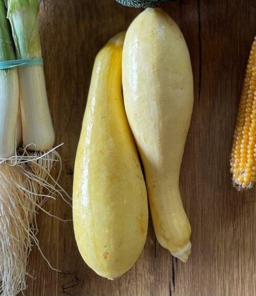 Yellow Squash- Braune