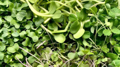 The Green Microstead: Micromix