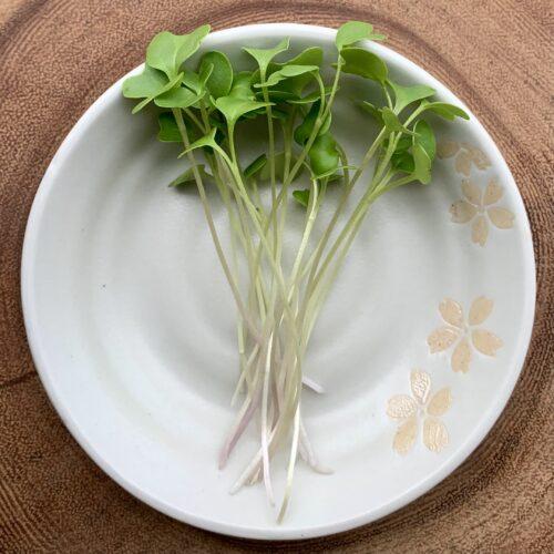 broccoli- the green microstead